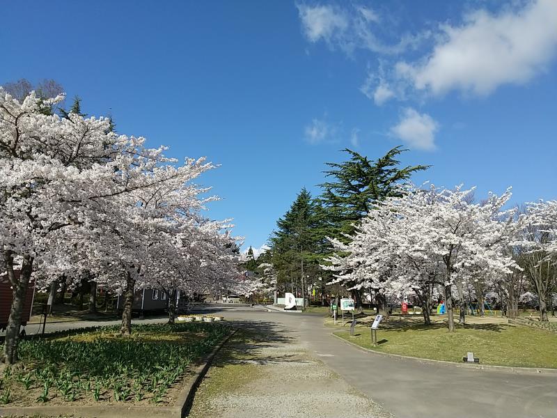 開成山大神宮側を写した写真